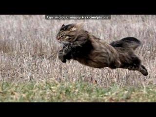 «Со стены Без кота и жизнь не та ツ» под музыку Отборные СМС приколы - Душевный прикол про кота. Picrolla